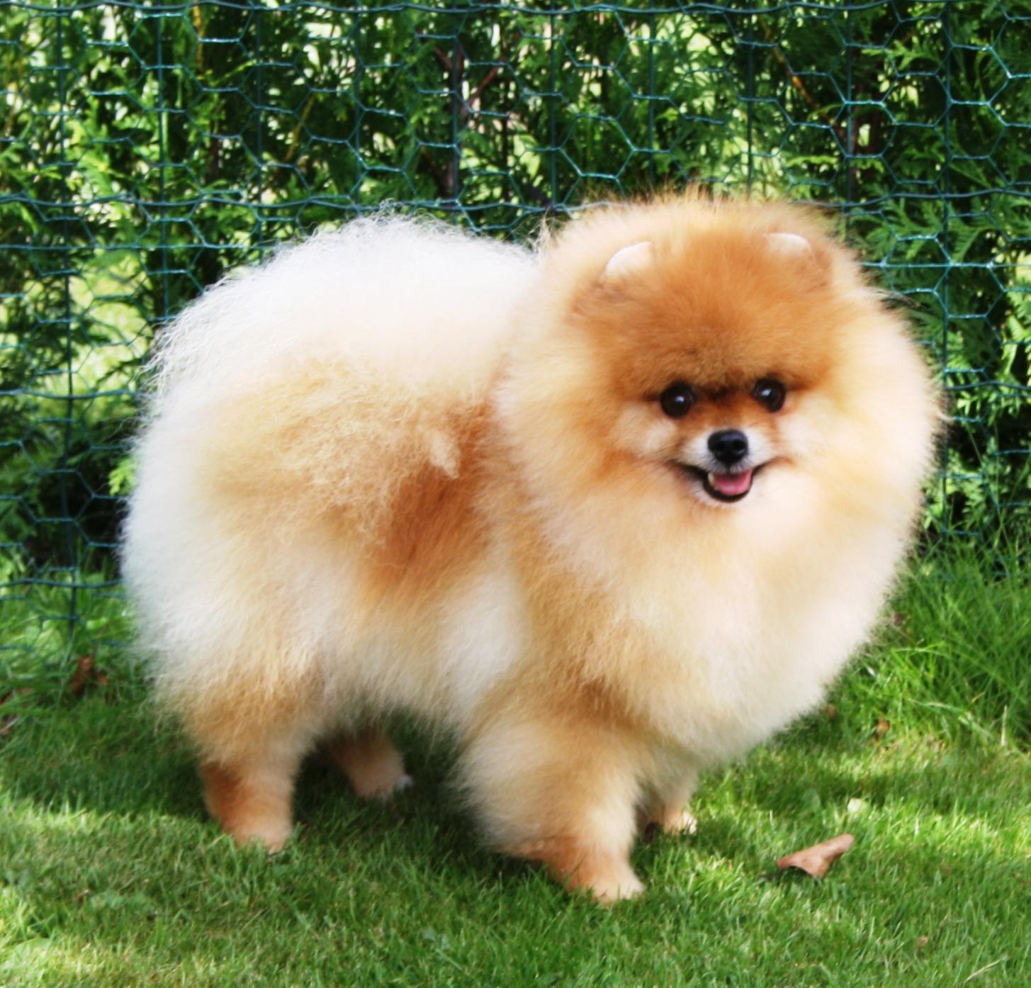 Om Indy | Sveriges Sötaste hund