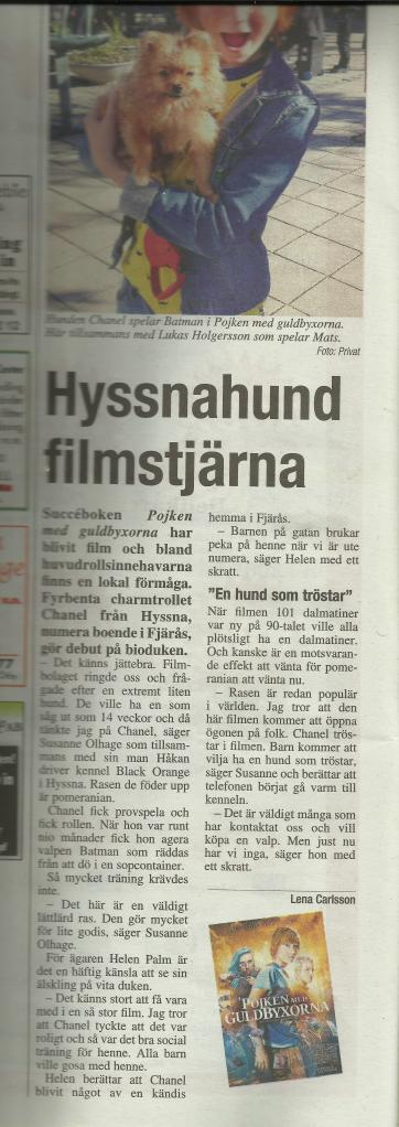 hyssnahund