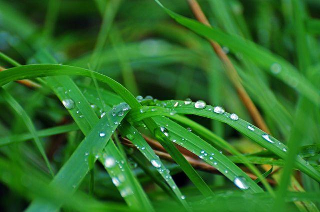 grässtrå.jpg