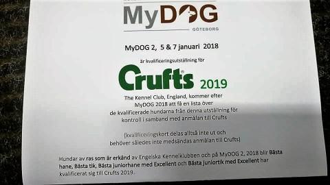 crufts2