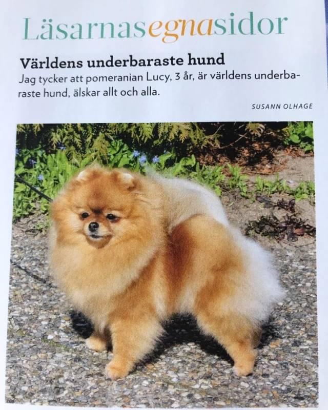 härliga_hund.jpg