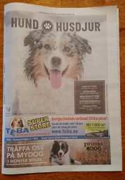 Hund_husdjur